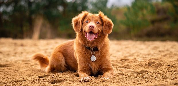 fluffy dog lying down on sand