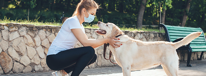 woman wearing mask and greeting yellow labrador