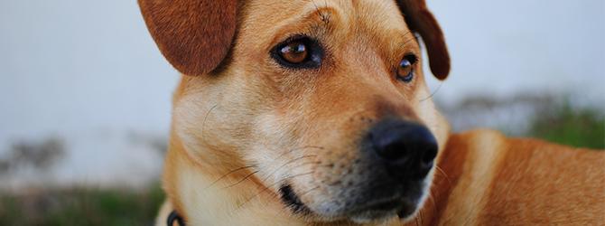 close up on dog's eyes