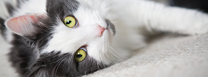 Permethrin Poisoning in Cats