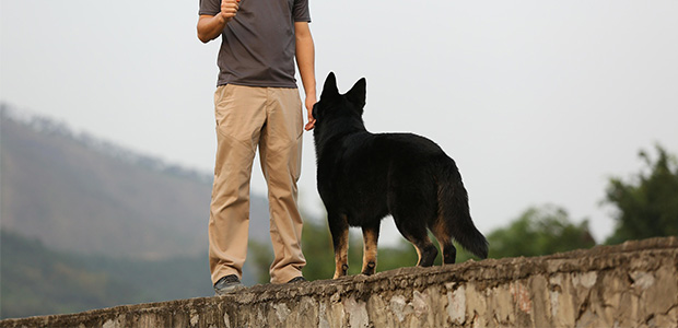 owner standing in front of dog