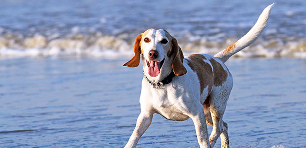 dog on beach wagging tail