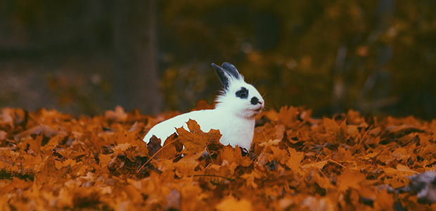 rabbit chilling in autumn leaves