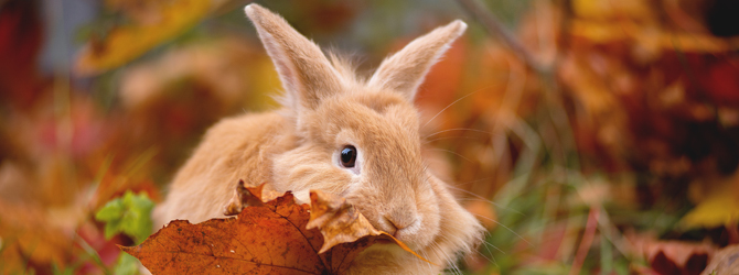 adorable rabbit with autumn backdrop
