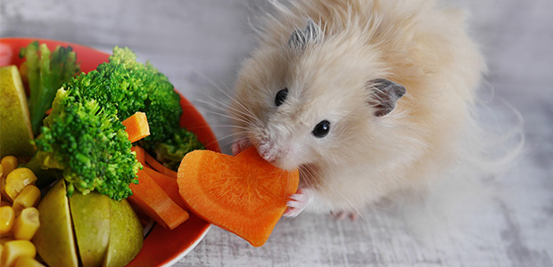 hamster eating carrot next to bowl of veg