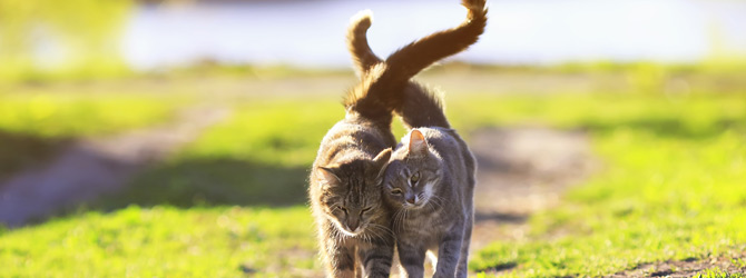 two cats walking together in spring