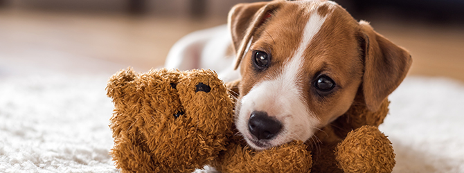 puppy playing with its toy