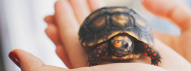 Tortoise health problems