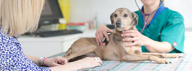 A dog attending a veterinary practice for an acupuncture session