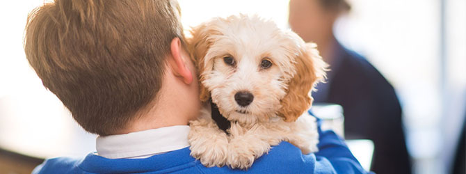 A dog in a young boy's arms