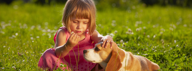 Little girl and dog playing in field